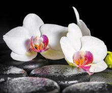 Crédence Orchidée blanche et galets