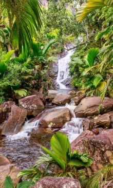 Crédence Ruisseau tropical