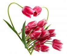 Crédence Cœur de tulipes