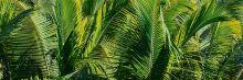 Crédence Paysage tropical